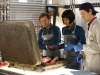 "BONES:  L-R:  Hodgins (TJ Thyne), Cam (Tamara Taylor) and Jeffersonian intern Finn Abernathy (guest star Luke Kleintank) investigate remains found in a suitcase in the ""The Friend in Need"" episode of BONES airing Monday, Feb. 18 (8:00-9:00 PM ET/PT) on FOX.  ©2013 Fox Broadcasting Co. Cr: John Johnson/FOX"